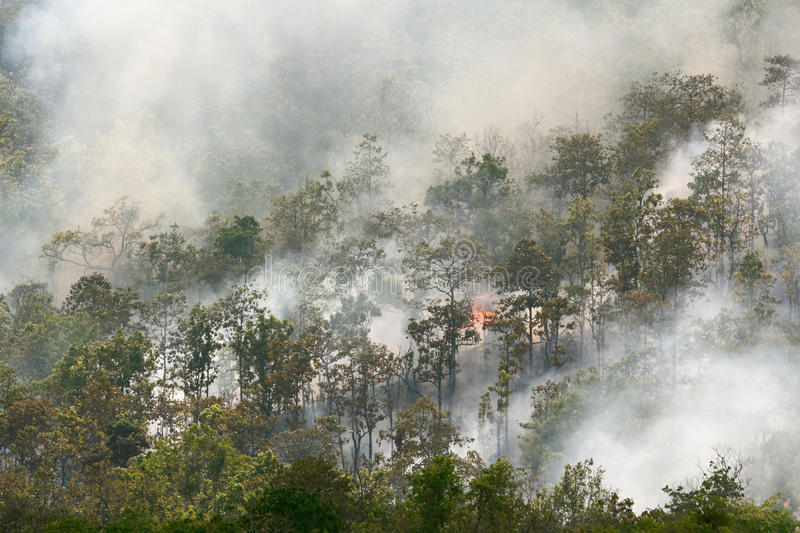 Forest fire. In tropical forest , Southeast Asia royalty free stock photo