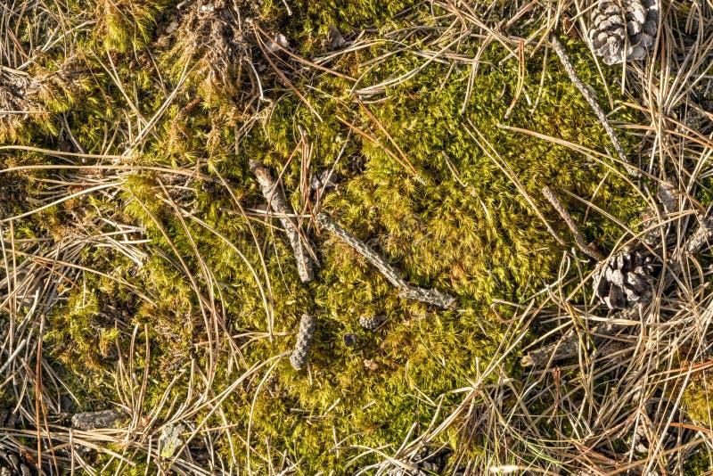 Forest Floor stock foto