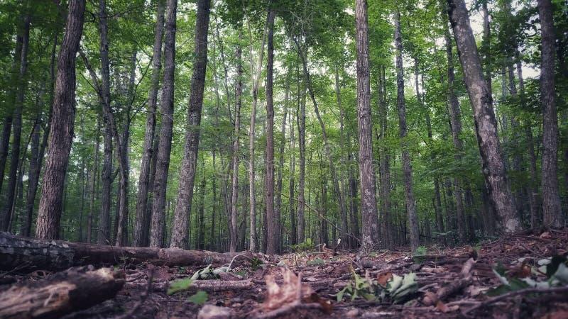 Forest Floor immagine stock libera da diritti