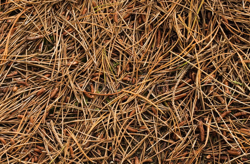 Forest Floor royalty free stock image
