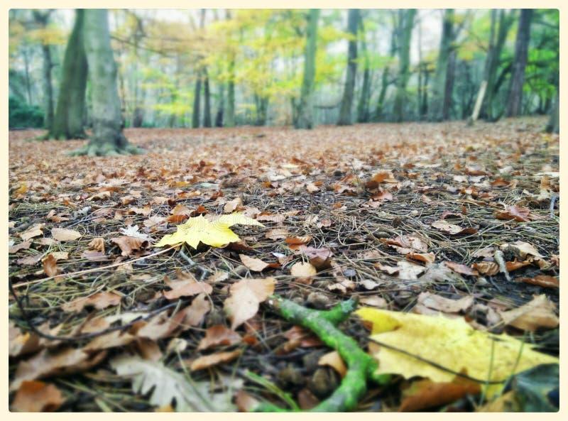 Forest Floor imágenes de archivo libres de regalías