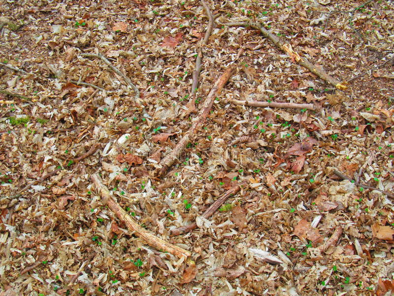 Forest Floor image stock