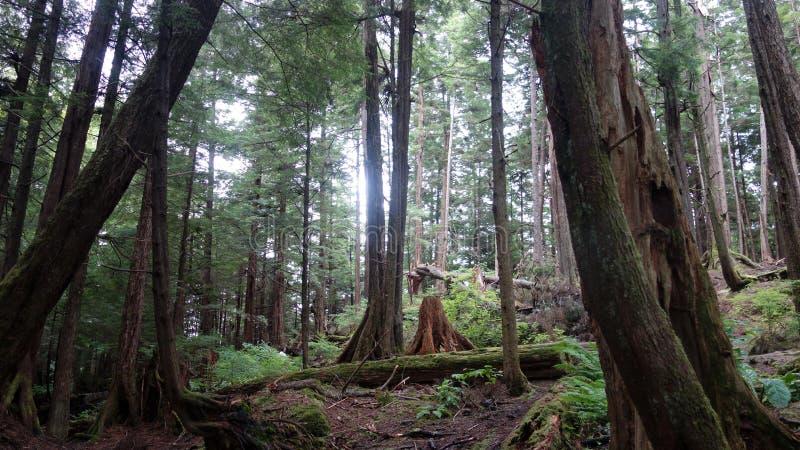 Forest Floor photographie stock libre de droits