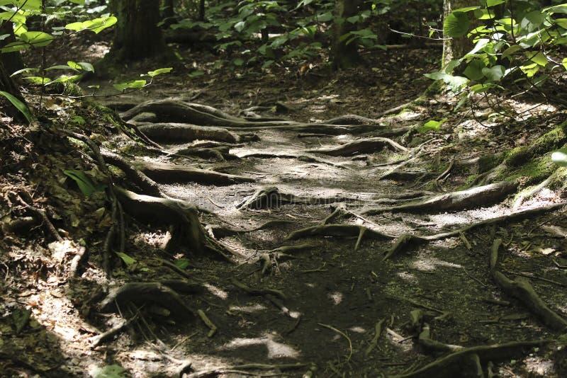 Forest Floor stockbilder