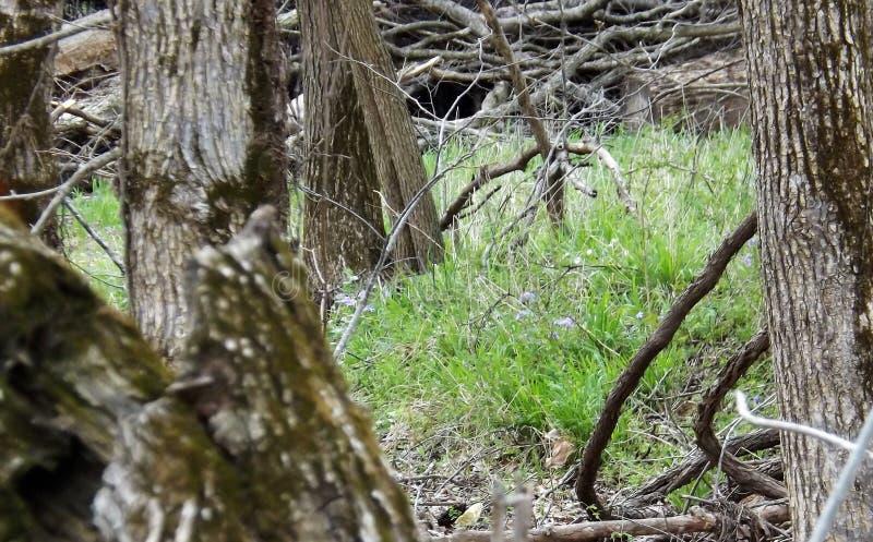 Forest Floor lizenzfreie stockfotos