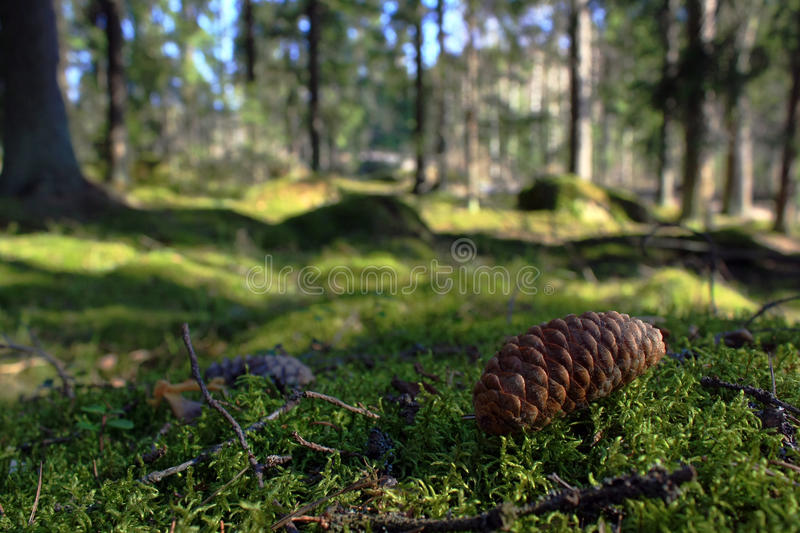 Forest floor stock image