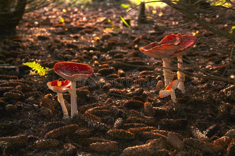 Download Forest Floor Anuncia O Natal Imagem de Stock - Imagem de encantador, floresta: 80101979