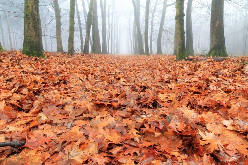 Forest floor in autumn stock image