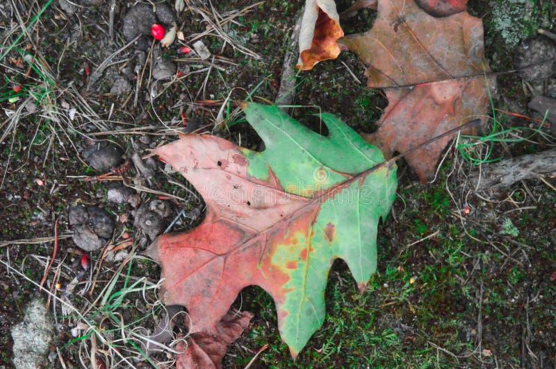 Forest Floor in Autumn stock photos