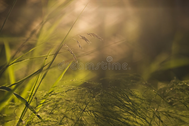 Forest floor close-up stock photography