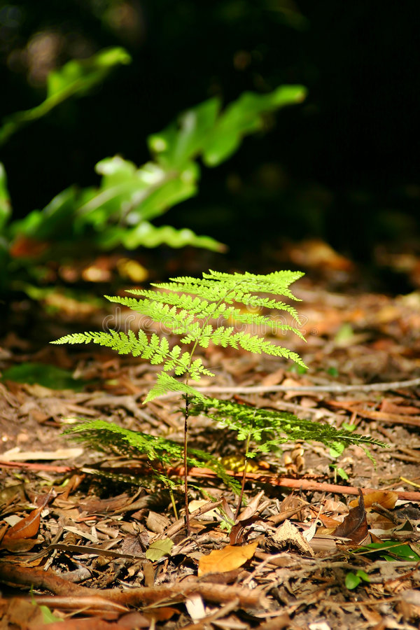 Download Forest Floor Fern stock photo. Image of forest, australian - 916936