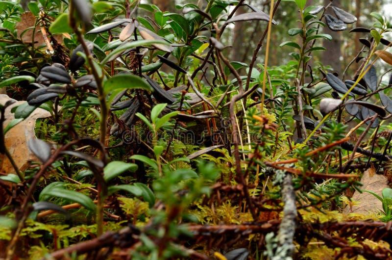 Forest floor foliage in autumn macro stock image