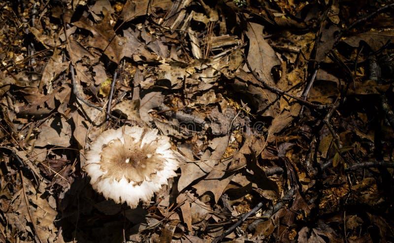 Forest Floor Fungi dans le projecteur photos stock
