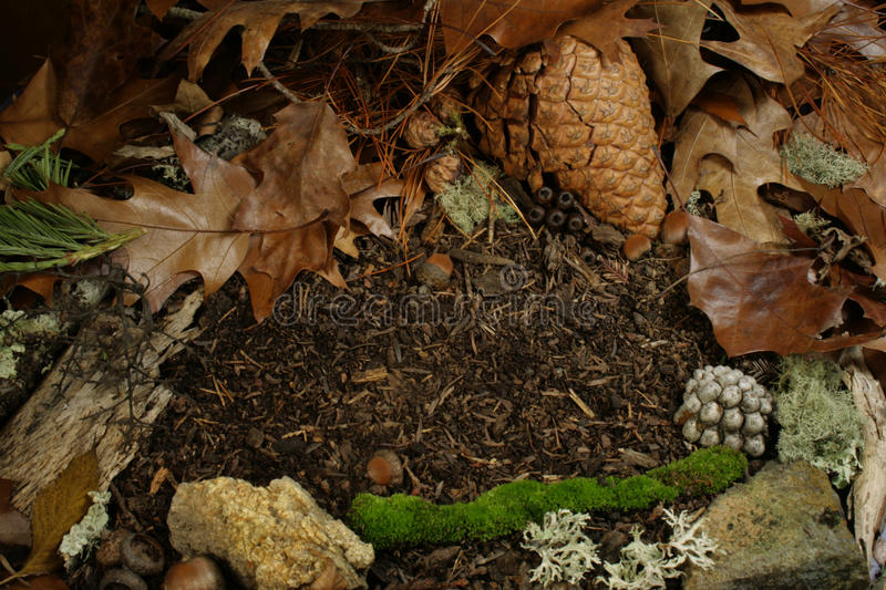 Forest floor with space for copy royalty free stock photos