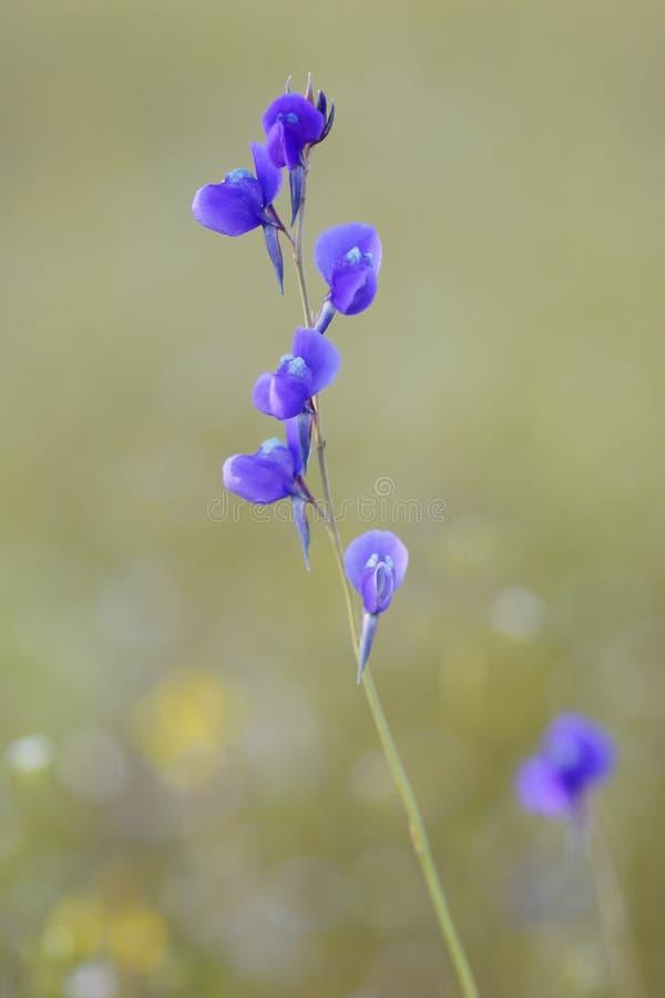 Forest Flower imagem de stock