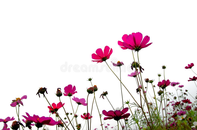 Download Forest of Flowers stock image. Image of closeup, colorful - 1959759