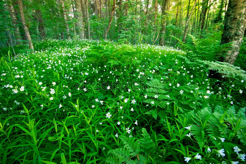 Forest and flowers royalty free stock image