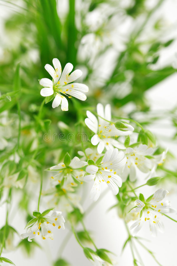 Download Forest flowers stock photo. Image of vase, decoration - 2317096