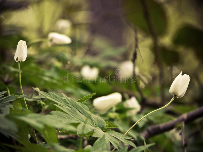 Forest flowers royalty free stock photography