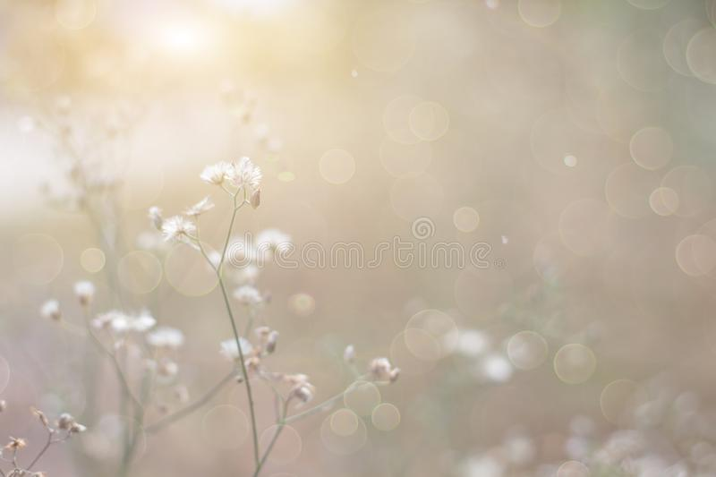 Forest flowers grass meadow with wild grasses,Macro image with small depth of field,Blur background royalty free stock image