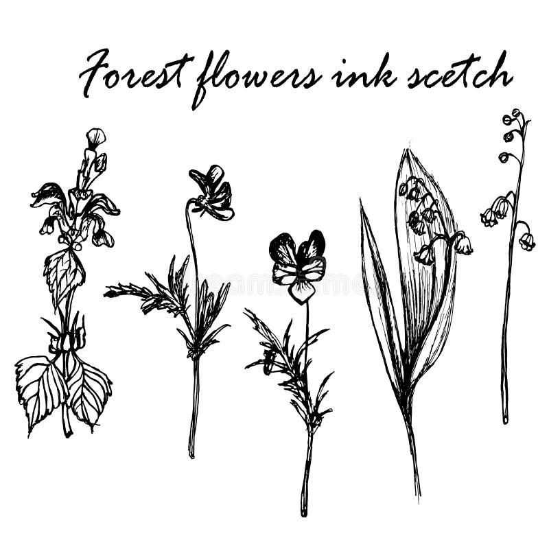 Forest flowers ink sketch illustration. Forest flowers ink sketch botanical illustration vector illustration