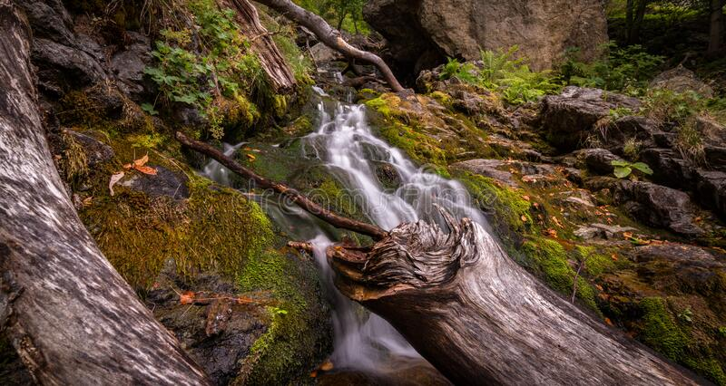Forest With Flowing River Surrounded With Grasses royalty free stock photo