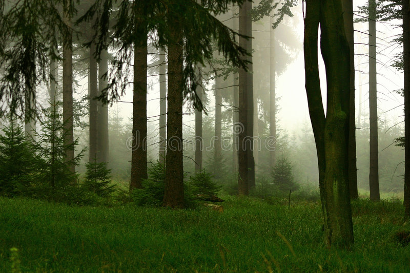 Forest in the fog stock images
