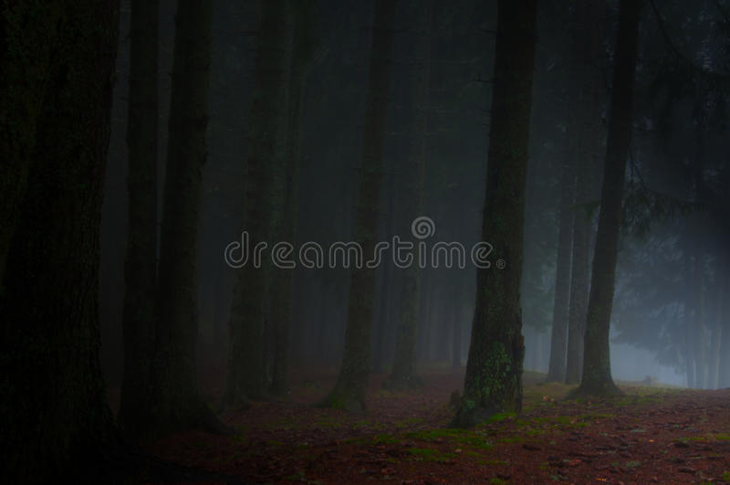 Forest fog stock photo