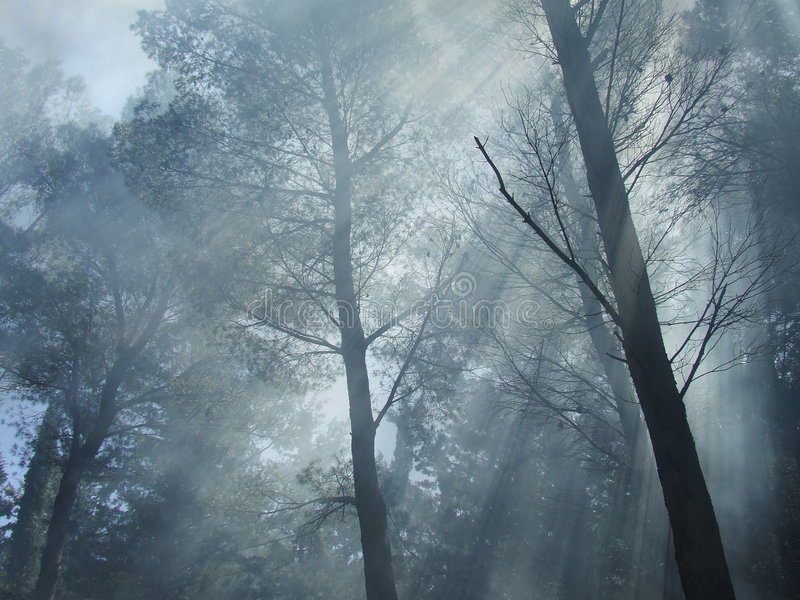 Forest fog. Fog and sun rays in the forest royalty free stock photography