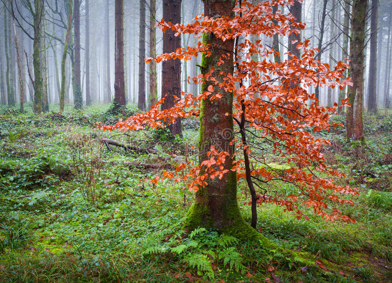 Download Forest In Fog Stock Photo - Image: 28756550
