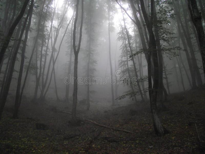 Forest Fog stock afbeelding