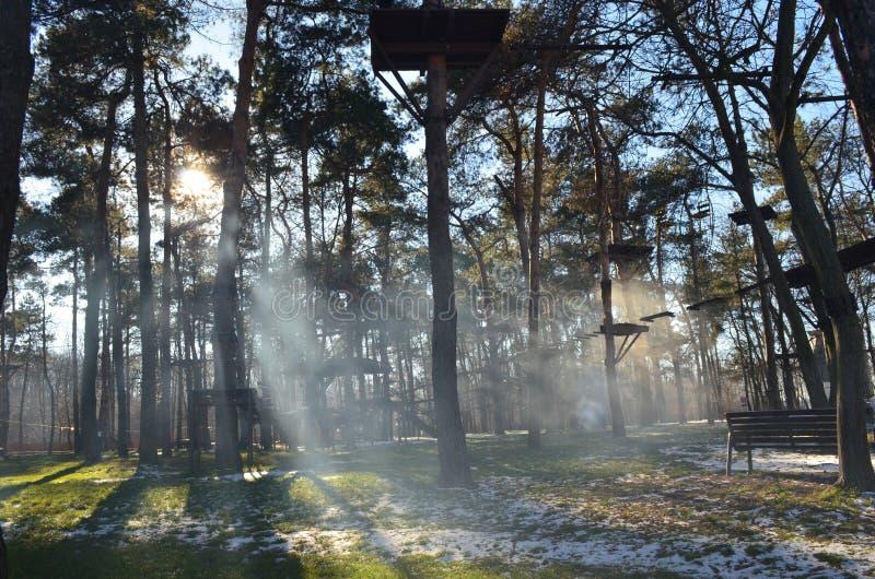 Forest Fog royaltyfri fotografi