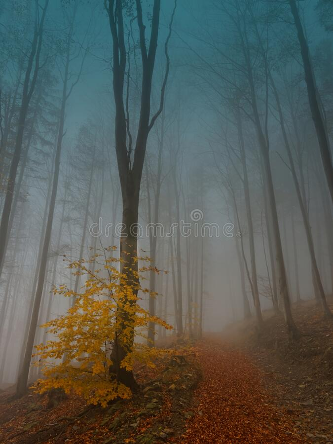 Forest in fog royalty free stock images