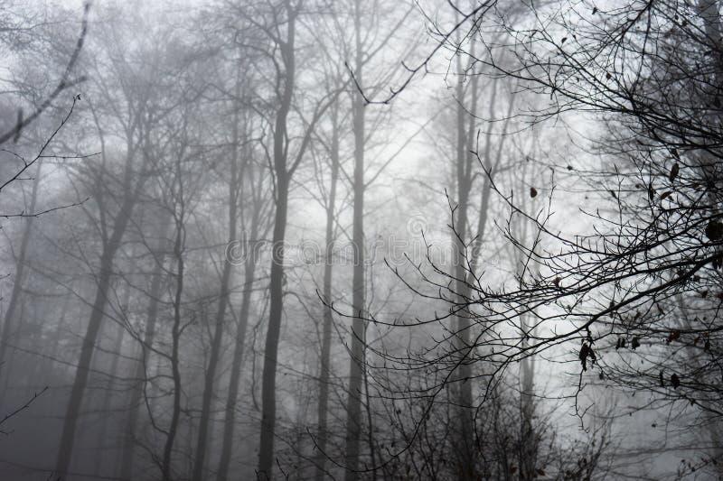 Forest Fog Background espeluznante fotografía de archivo
