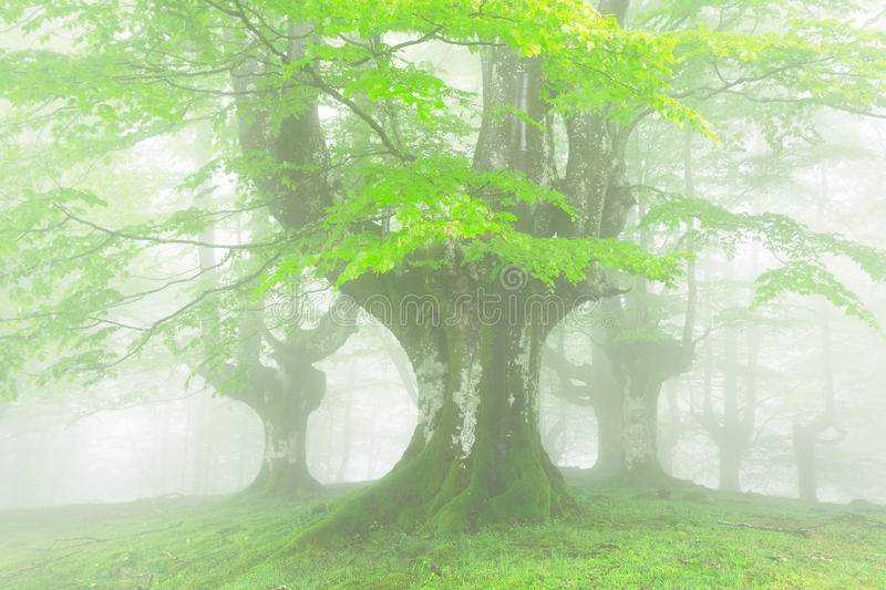 Forest with fog and beautiful light on spring stock photos