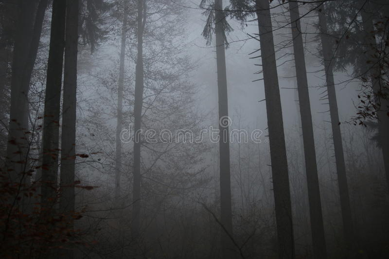 Forest Through The Fog in Germany royalty free stock images