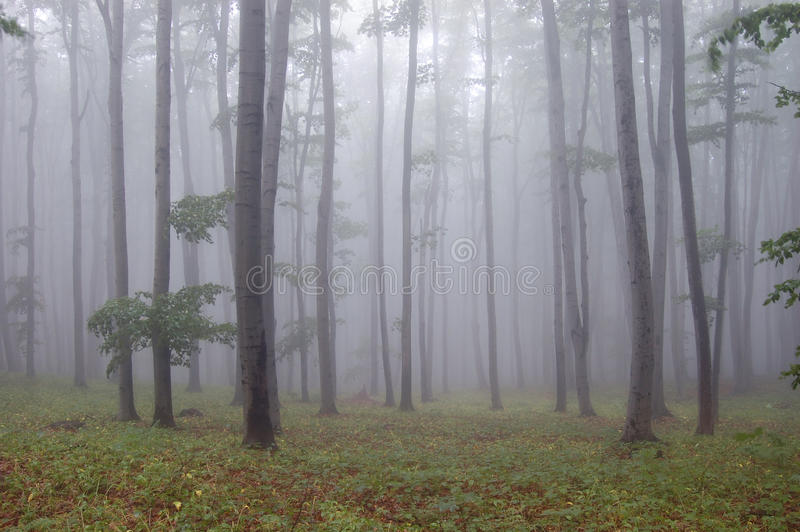 Download Forest With Fog And Green Grass Stock Photo - Image: 22820728