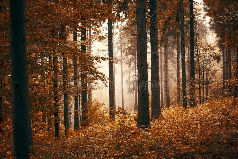 Forest With Fogs stock photo