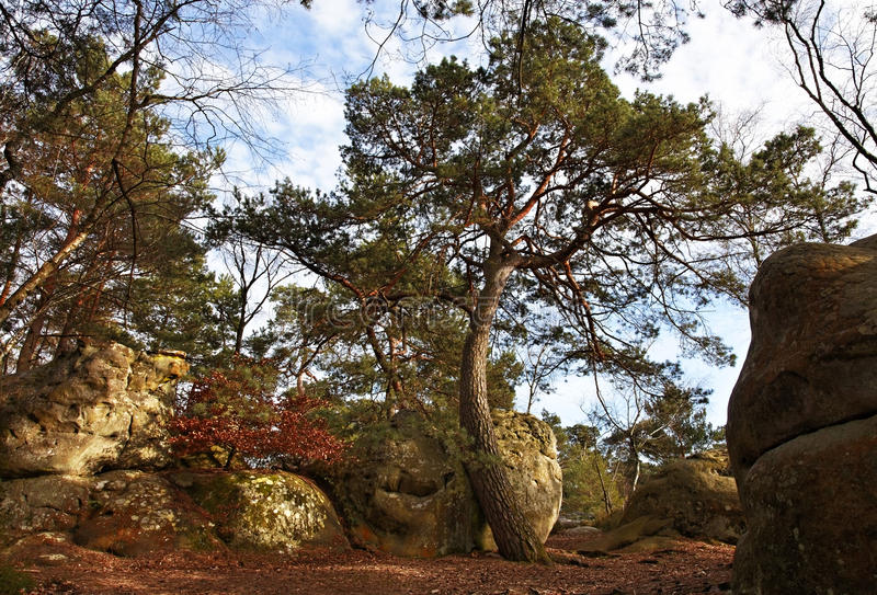 The forest of Fontainebleau royalty free stock photo