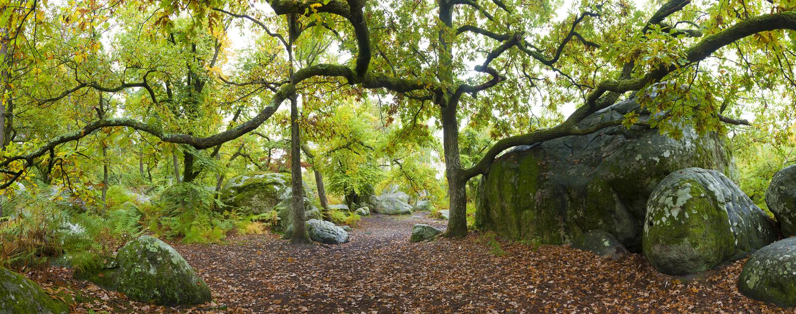 Forest of Fontainebleau royalty free stock photo