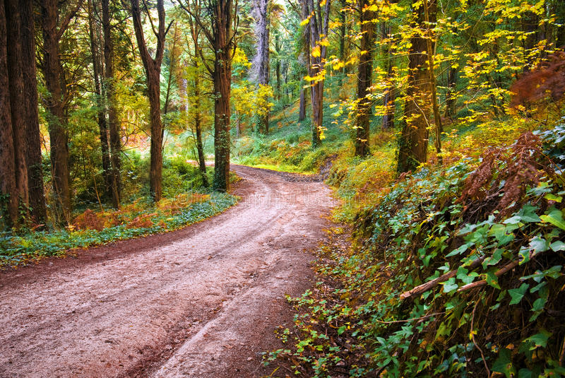 Download Forest Footpath stock photo. Image of brown, green, environment - 11921092