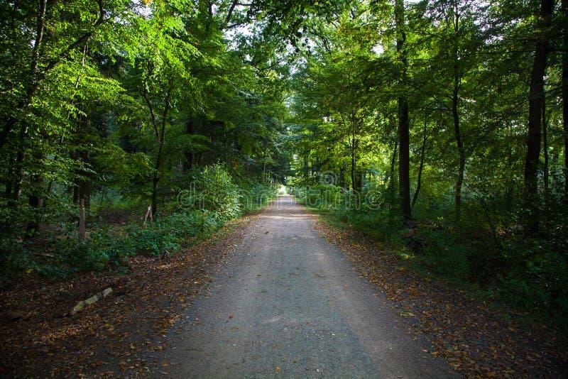 Forest Footpath verde imagem de stock royalty free
