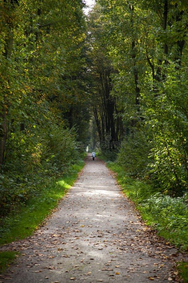 Forest Footpath verde imagens de stock royalty free