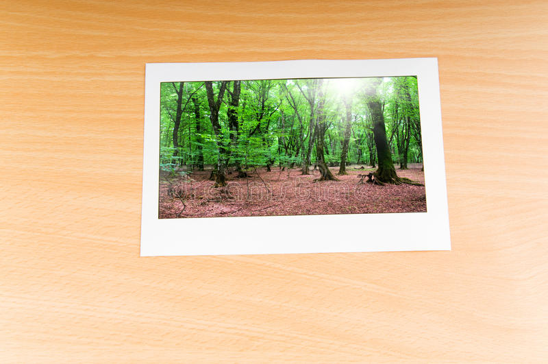 Download Forest on the   frames stock image. Image of park, foliage - 20715339