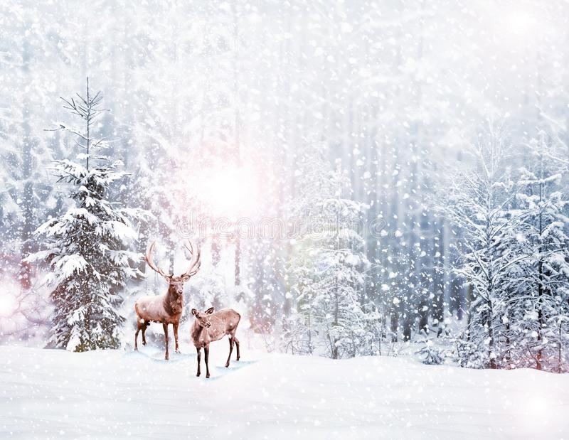Snow covered trees. deer royalty free stock photos