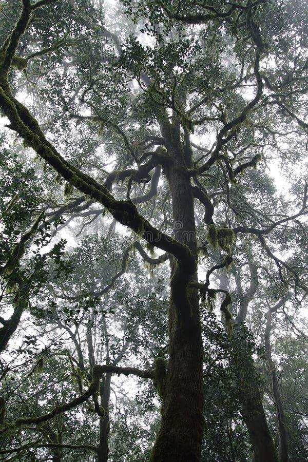 Forest in Garajonay National Park, La Gomera stock photo