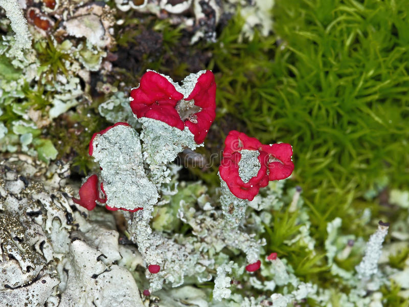 Forest garden with lichens royalty free stock photography
