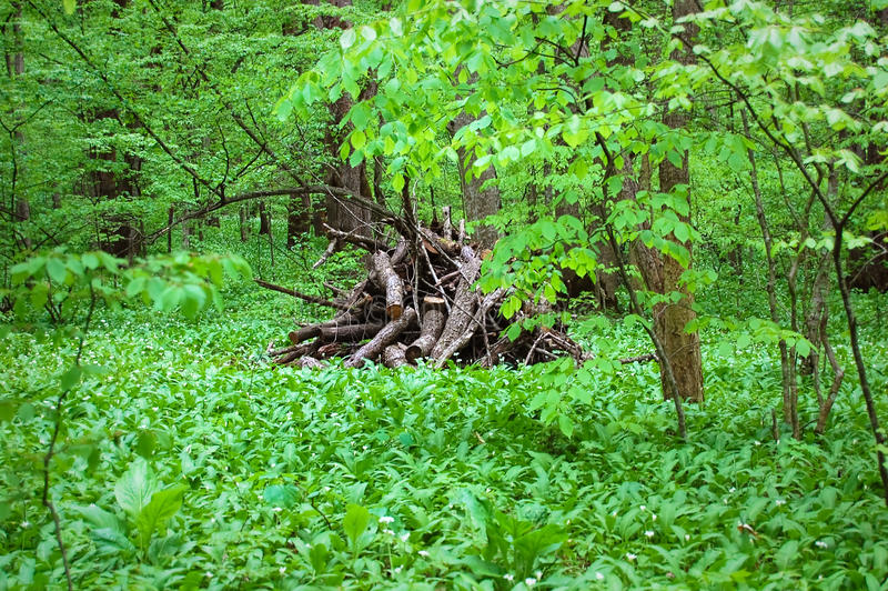 Forest Glade stock image