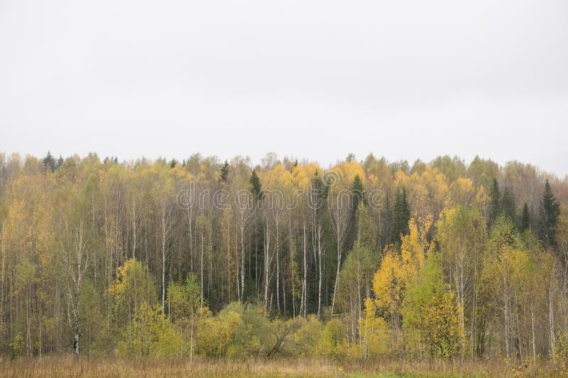 Forest Glade in autumn.Beautiful autumn landscape. stock image