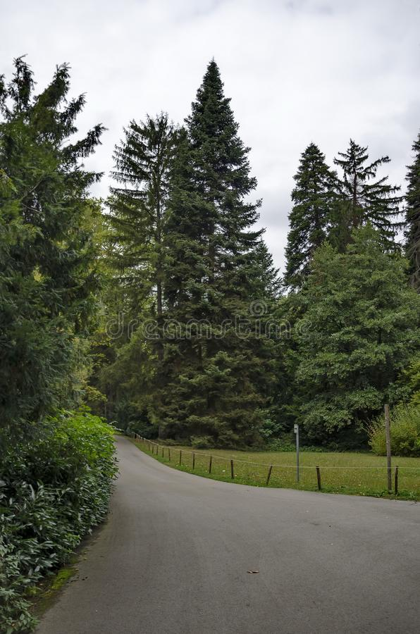 Forest, glade and path in National monument of landscape architecture Park in former time royal residence on outskirts of Sofia. Forest, glade and path in royalty free stock photo